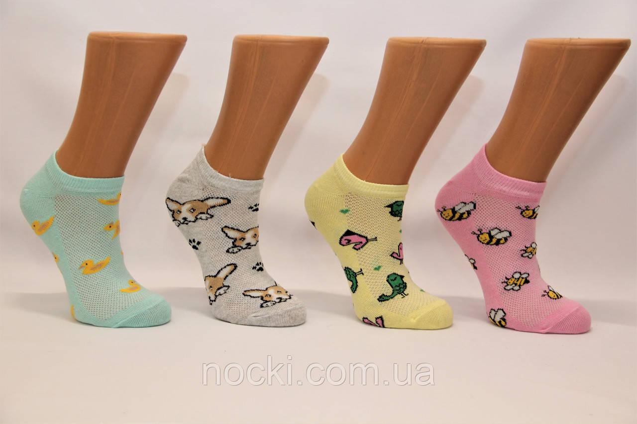 Женские носки короткие эконом класс в сеточку КЛ 38-40  зверюшки
