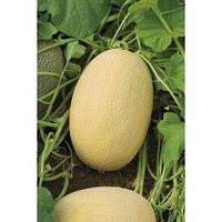 Семена дыни Бижур F1 (Bijour F1), Nickerson Zwaan (Никерсон Цваан), упаковка 1000 семян