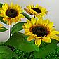 Фонарь садовый Подсолнух  на солнечной батарее, теплый белый., фото 3