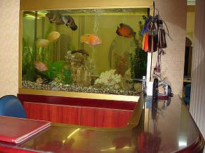 Наши рыбки и черепахи, которые живут у нас в салоне