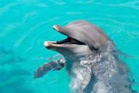 Панно Дельфины фотопечать кафель, плитка 20х30см.