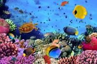 Панно Подводный мир кафель на стены, плитка 20х30см.