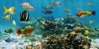 Рыбки в море Подводный мир кафель на стены, плитка 20х30см.