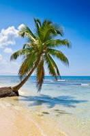 Панно Пальма на берегу Пляж  кафель на стены, плитка 20х30см.