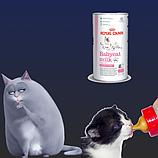 Заменители молока для котят