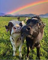 Оборудование для крупного рогатого скота