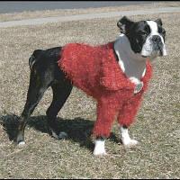 Doggyduds SHAGGY SHRUG кофточка, одежда для собак