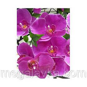 3D открытка Орхидея