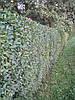 Хвойные и лиственные деревья и кустарники для живой изгороди(забора)