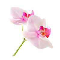 Товары для орхидеи
