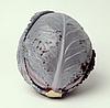 РОДОН F1 - семена капусты краснокочанной калиброванные 2 500 семян,Hazera