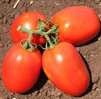ГАЛИЛЕЯ F1 - томат, Hazera, фото 1