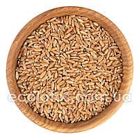 Пшеница яровая 500 г