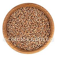 Пшеница темная 500 г