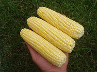 "Семена - Кукуруза сахарная ""Леженд F1"" ТМ Клоз (Clause) Франция, 1 кг"