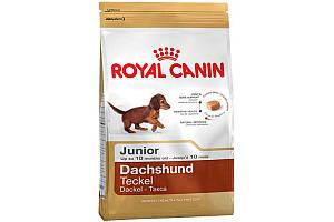 Royal Canin Dachshund Junior 1.5 кг - сухой корм для щенка таксы до 10 месяцев