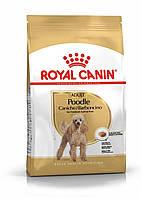 Royal Canin Poodle Adult 1.5 кг - сухой корм для пуделя старше 10 месяцев