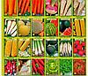Семена (травы, свеклы, томатов, огурцов, моркови, редиски, салатов, другие)