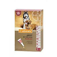 Bayer Advocate для собак весом от 10 до 25 кг капли на холку от блох и клещей, упаковка 3 пипетки