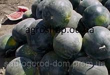 Семена арбуза Холодок  0,5кг