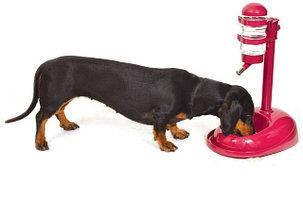 Миски і поїлки для собак