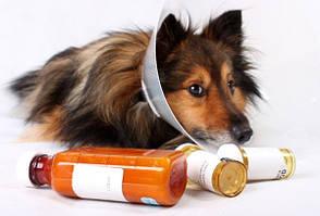 Ветеринарні препарати для собак