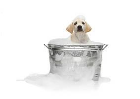 Шампуни, Спреи для собак