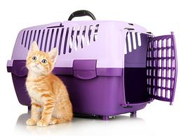 Перенесення, транспортувальні бокси для кішок