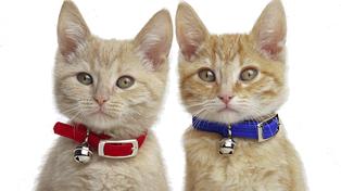 Шлейки,брелоки, повідці, нашийники для кішок