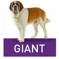Royal Canin Giant-для собак весом более 45 кг