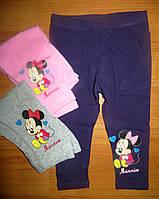 Лосинки для девочек Disney  62-68-74-80-86 рр..синий, розовый, серый