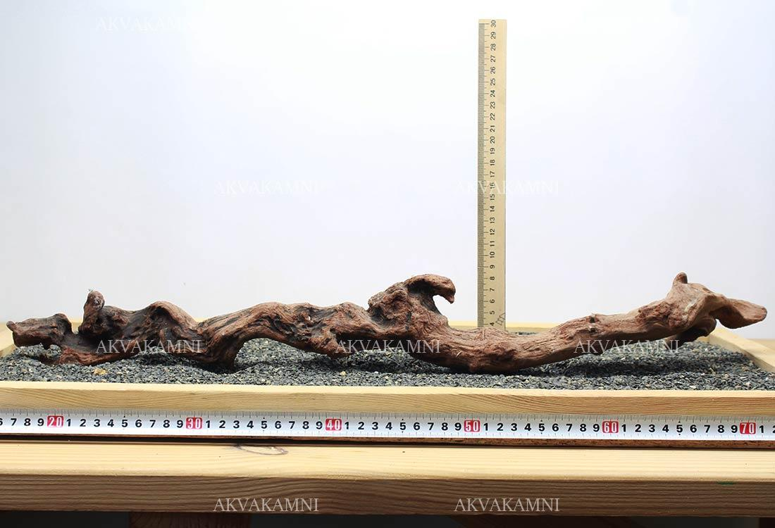 Корень коралловый №228