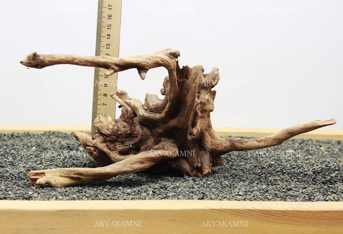 Корень коралловый №235