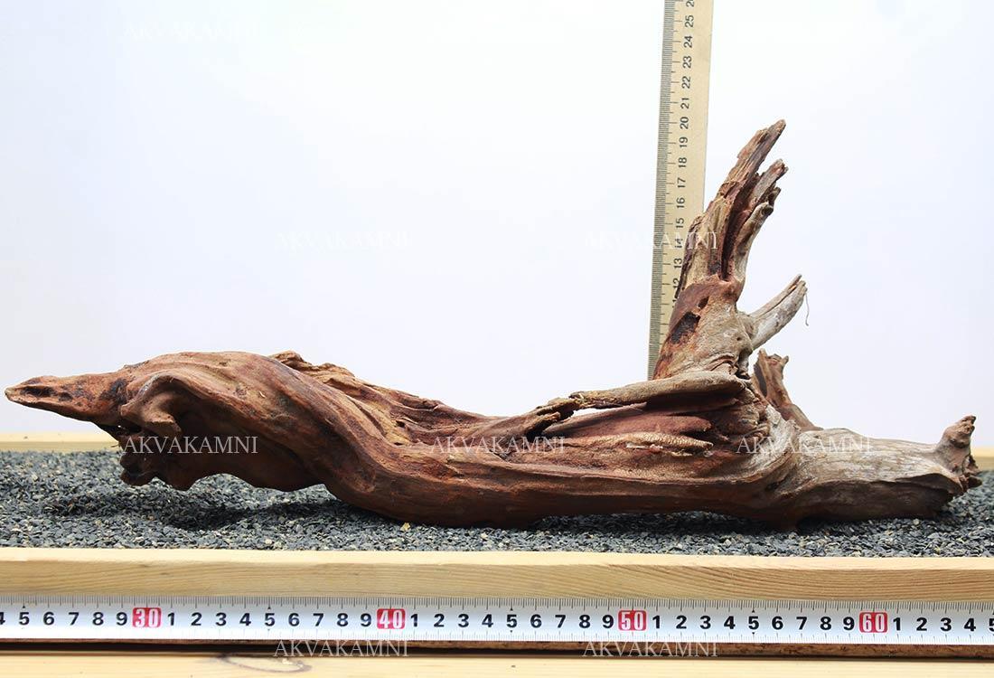 Корень коралловый №229