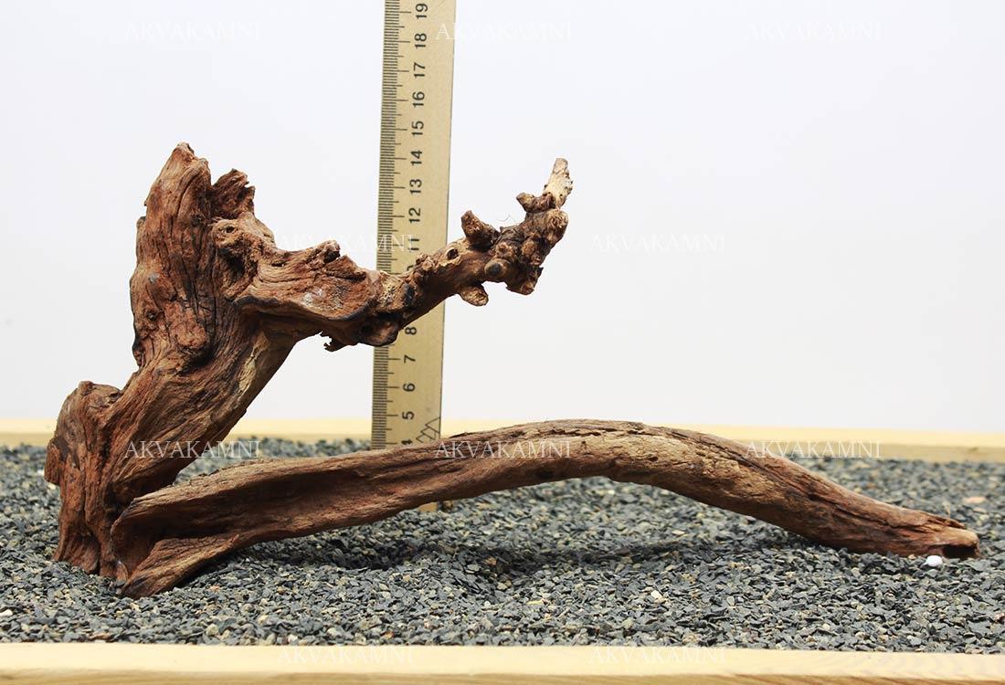 Корінь кораловий №238