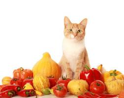 Вітаміни для кішок