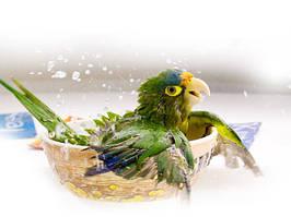 Засоби по догляду для птахів