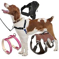 Шлеи для собак