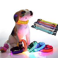 Светящиеся ошейники для собак