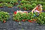 Агроткань Agreen мульчують 85 г/м2 1,6х100 м., фото 8