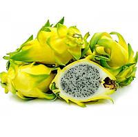 Питахайя (Pitahaya) Жёлтая черенкован.25-30 см. Комнатный