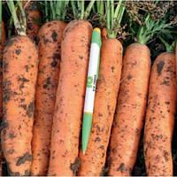 Морковь Фидра F1 (Fidra RZ), 100 тыс. семян, тип Нантес, 110 дн. (калибр. <1,6мм)