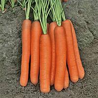 Семена моркови Морелия F1 (Morelia), 1 000 000сем., Rijk Zwaan