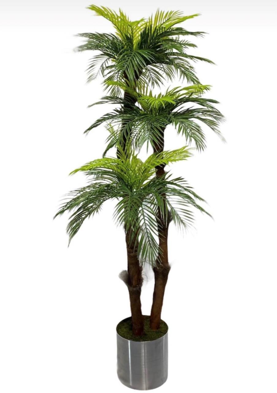 Пальма - розкішне декоративна рослина