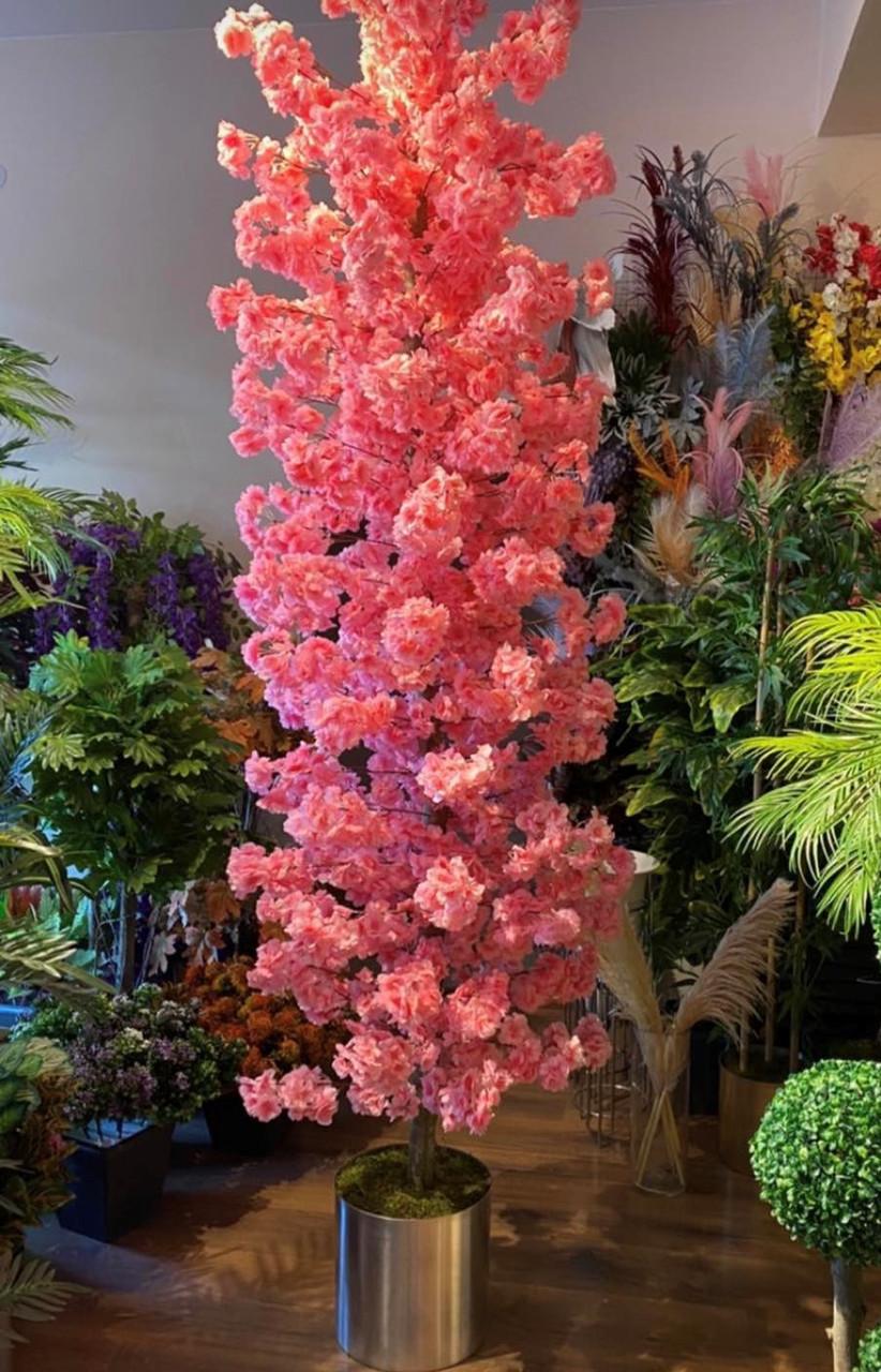 Сакура - квітуча вишня у вашому будинку