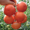Семена томата Лилос 73-490 F1 (Lilos), 100 сем., Rijk Zwaan