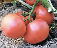 Семена томата Эсмира F1 (Esmira), 100 семян (розовый), Rijk Zwaan