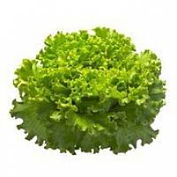 Батавия салат Афицион (Aficion RZ), 5000 семян, дражже