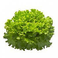 Батавия салат Афицион (Aficion RZ), 1000 семян, дражже