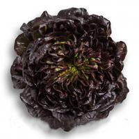 Салат Саланова/маслянистый Kли (Klee RZ) зеленый, 1000 семян, дрожже